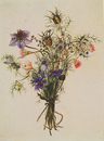 Bouquet - virgin in the countryside and cornflowers